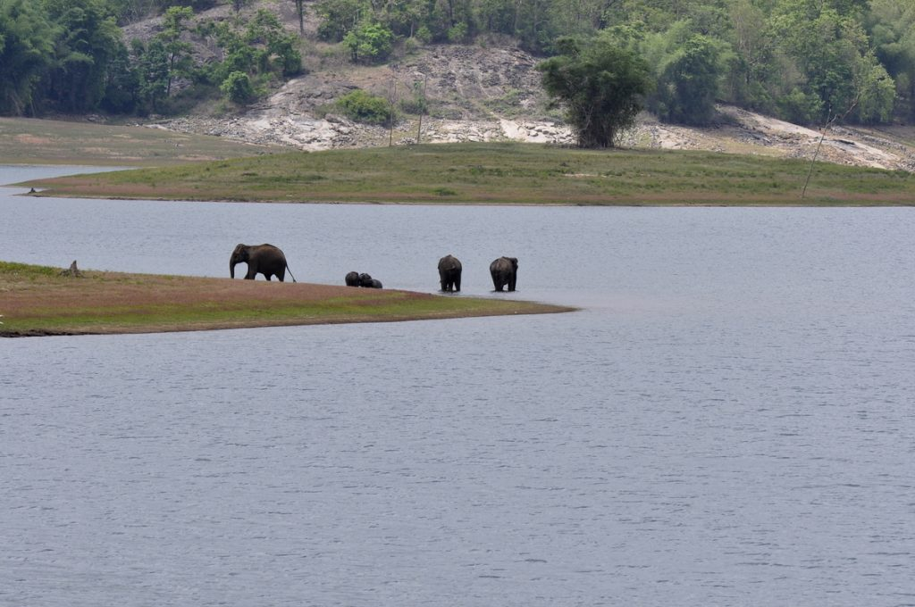 national parks in south india